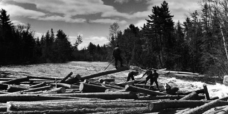 Four lumberjacks stand on a logjam in a river, using sticks to break up the mass of lumber, Maine, circa 1930.