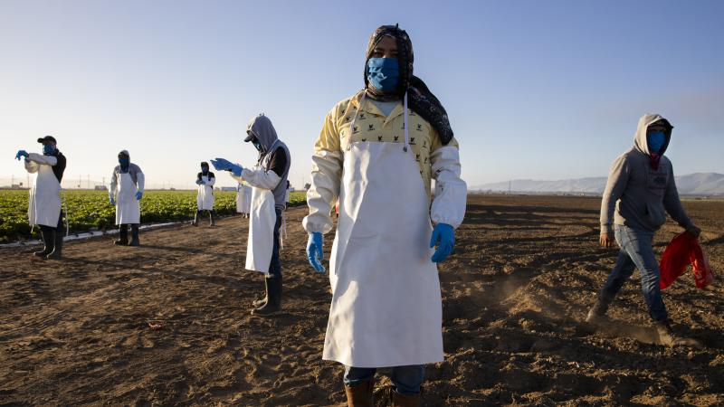 Before massive wildfires broke out in California, farmworkers already had to take extra precautions for COVID-19. Now they must worry about dangerous air from wildfires. In this photo, farmworkers arrive early in the morning to begin harvesting on April 2
