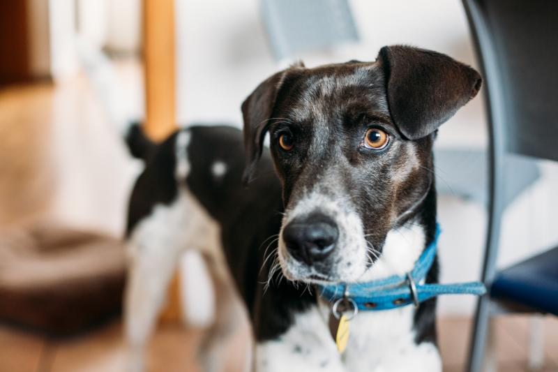 A new study examines whether or not dogs are able to understand the difference between a human's mistake versus active intent to withhold a treat.