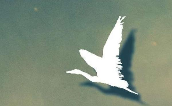Cover of 'Ten White Geese'