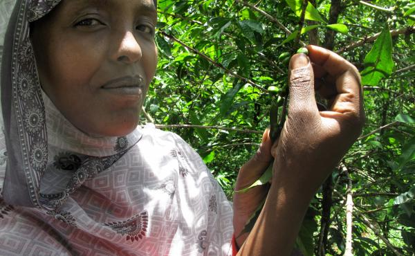 """Haleuya Habagaro says she always knew her coffee was exquisite. """"When I roast the coffee, people come to ask where that strong fruity smell is coming from."""""""