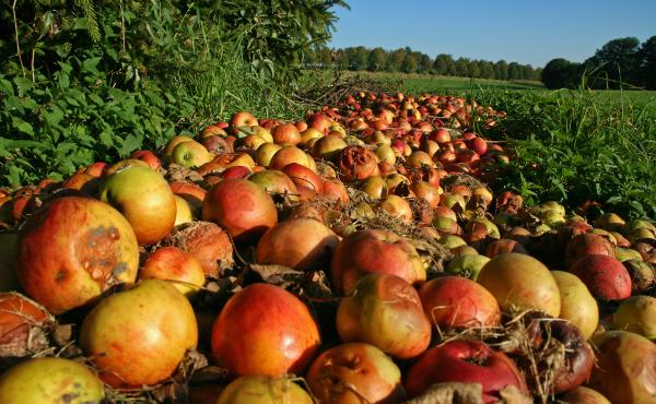 The government's first ever national target to reduce food waste will encourage farmers to donate more of their imperfect produce to the hungry.