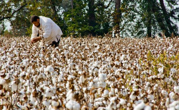 """One of Twitty's projects is his """"Southern Discomfort Tour"""" — a journey through the """"forgotten little Africa"""" of the Old South. He picks cotton, chops wood, works in rice fields and cooks for audiences in plantation kitchens while dressed in slave clothi"""
