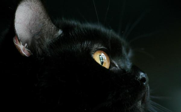 For one English woman, her black pet cat was very lucky indeed.