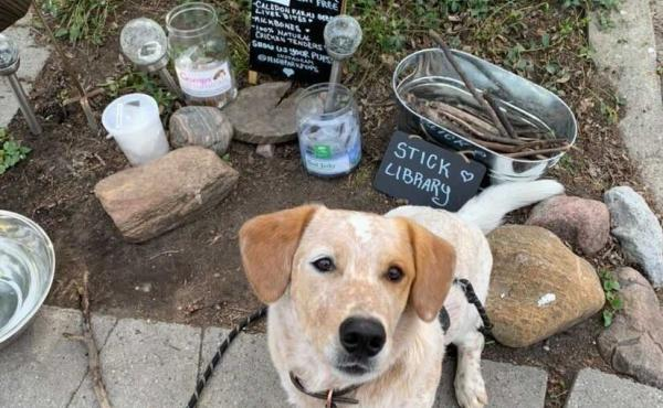 """Clifford and his owner, Amanda Rong, are frequent """"patrons"""" of StarPups Cafe in Toronto."""
