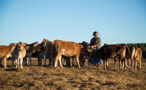 """Mary Lou Wesselhoeft is a dairy farmer in the Florida Panhandle. Her Ocheesee Creamery pasteurized skim milk has nothing added — and that's the problem. According to regulations, without added vitamins, it can only be sold as """"imitation skim milk."""""""
