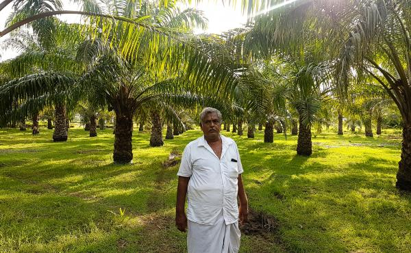 Sampath, 63, planted these oil palm trees on his farm in Tamil Nadu, India, 12 years ago, but has yet to turn a profit.