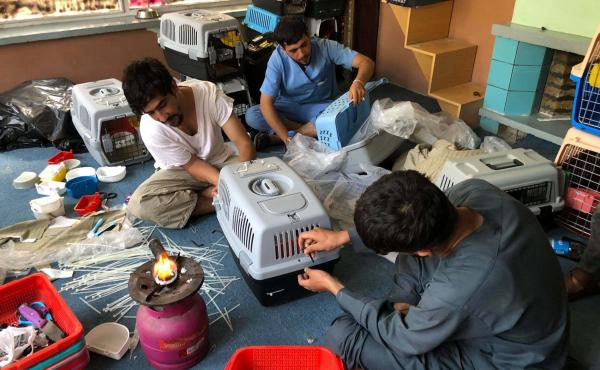 Staff members at the Kabul Small Animal Rescue are working to put together travel crates so the organization's dogs and cats can safely be evacuated out of Afghanistan.