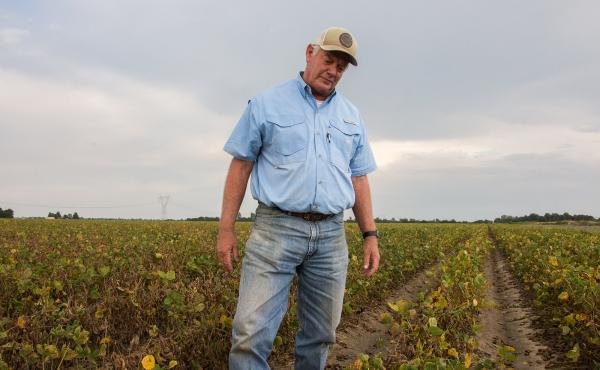 """David Wildy, a prominent Arkansas farmer, in a field of soybeans that were damaged by dicamba.  He says that """"farmers need this technology. But right is right and wrong is wrong. And when you let a technology, a pesticide or whatever, get on your neighbor"""