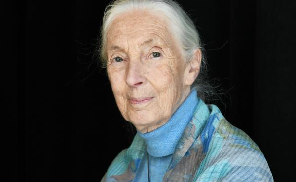 Dr. Jane Goodall in 2019. She has co-authored a new book, The Book Of Hope.