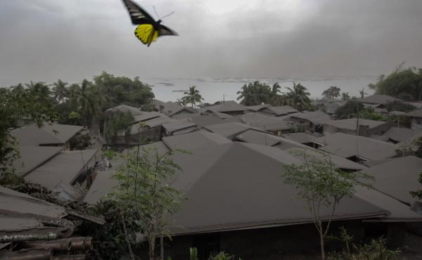 A yellow butterfly flies above a house covered by ash from the Taal Volcano in the town of Agoncillo in Batangas City on Monday.