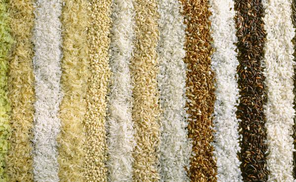 Scientists find that rice grown under elevated carbon conditions loses substantial amounts of protein, zinc, iron and B vitamins, depending on the variety.