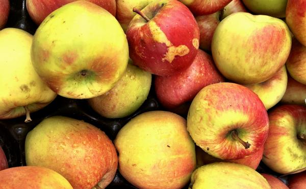 Unsightly scars on the outside of fruit might reflect higher nutrition within.