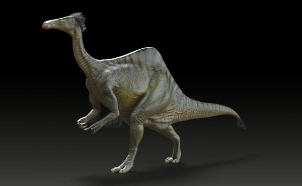 Reconstruction of Deinocheirus mirificus.