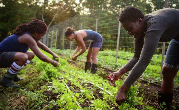 Farmers pick crops at Soul Fire Farm in New York state. It's run by Leah Penniman, a farmer and activist working to diversify the farming community and reconnect people to their food.