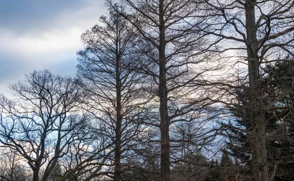 The landscape at Longwood Gardens, Kennett Square, Pa., is still beautiful in the winter.