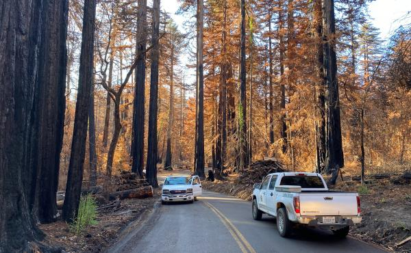 These days only park rangers and loggers are allowed in to Big Basin Redwoods State Park following a devastating wildfire that destroyed most of the infrastructure in California's oldest and one of its most iconic state parks. Big Basin is home to the lar