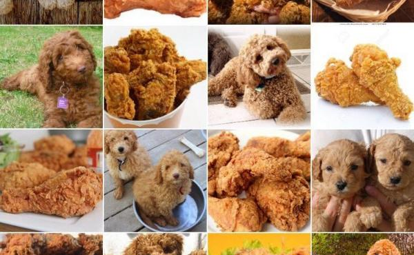 Labradoodle or fried chicken? The bark heard around the world.