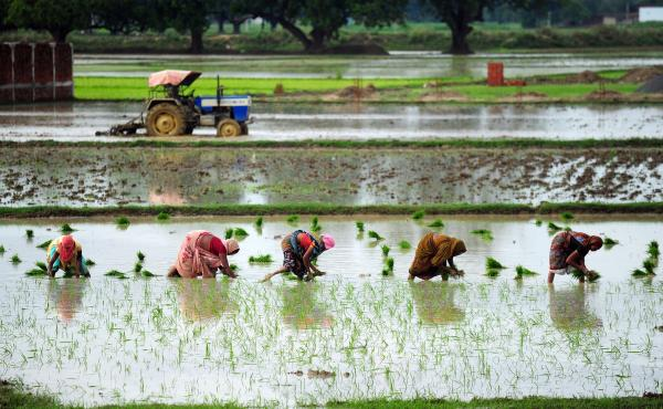 Indian female farmers sow paddy in a field during monsoon season near Allahabad on July 19, 2014. The monsoon rains, which usually hit India from June to September, are crucial for farmers whose crops feed hundreds of millions of people.