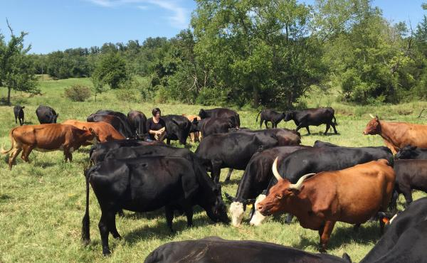 Susan Edmonson, a cattle rancher from Henryetta, Okla., with some of her cattle. Since last fall, cattle thieves have thinned her herd, one animal at a time — a major financial blow for her farm.