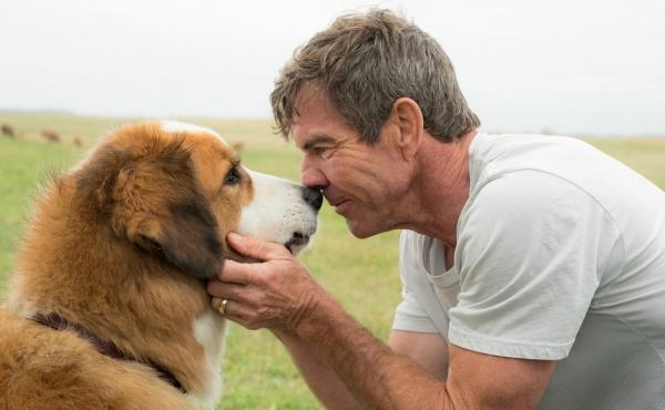 Nose Thyself: Buddy (voiced by Josh Gad) and Ethan (Dennis Quaid) get existential in A Dog's Purpose.