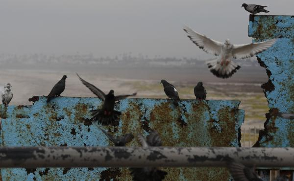 Birds fly and land on the U.S. border wall, seen from Tijuana, Mexico. Lawmakers in Washington are still finalizing a border security funding deal with more resources for physical barriers.