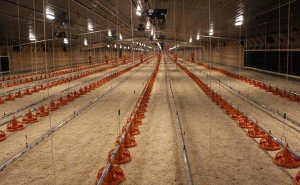 The first set of barns that will eventually supply chickens for the Costco project was recently completed near the town of Hooper, Neb. Approximately 20,000 breeding hens will be raised here.