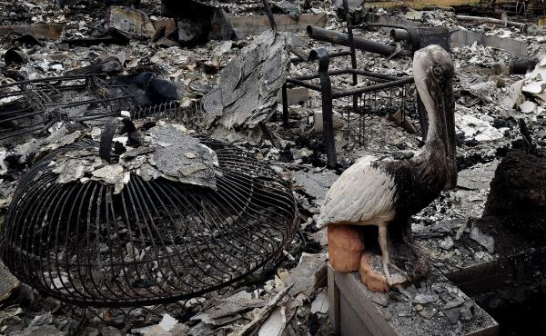 A burnt pelican statue stands beside a fire destroyed house after the Valley Fire swept through the town of Middletown, Calif., earlier this week.