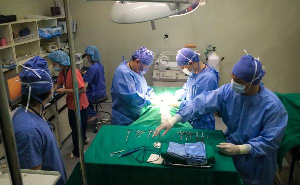 A surgical team at Sooam Biotech in Seoul, South Korea, injects cloned embryos into the uterus of an anesthetized dog.