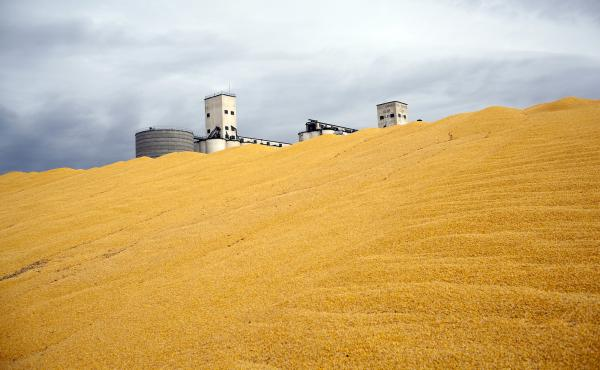 Surplus corn is piled outside a storage silo in Paoli, Colo. Do federal farm subsidies encourage the production — and perhaps overconsumption — of things that we're told to eat less of, like high fructose corn syrup or meat produced from livestock rai