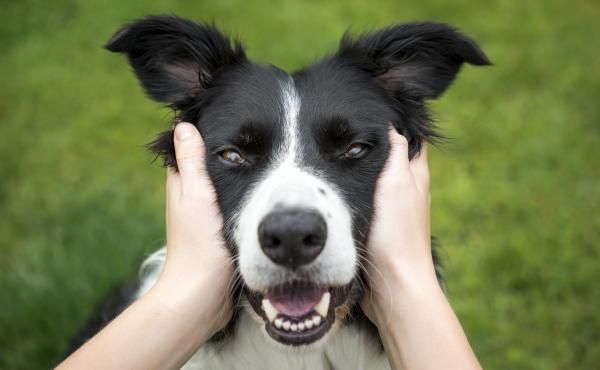 If you get to look at dogs and hug them every day, you just might live longer than people who don't have to clean animal hair off their clothes, according to a pair of studies out this month.