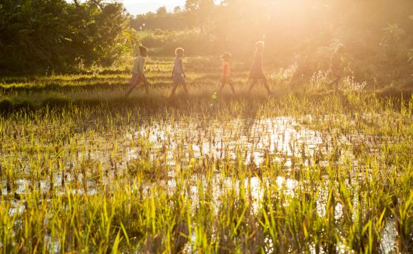 Children walk through a rice field outside the town of Kelilalina in eastern Madagascar. Rice is the dominant food and the dominant crop on the Indian Ocean island, but changing weather patterns are disrupting production in some parts of the country.