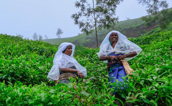 Tea leaf pickers in the Indian tea industry are nearly all women, and in the southern tea-growing state of Kerala, they earn the lowest daily minimum wage of any sector in the state. They work six days a week rain or shine. But J. Rajeshwari (right) helpe