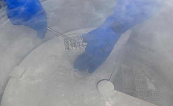 After a cryogenic tank like the one in this file photo lost a great deal of liquid nitrogen, a fertility clinic began the process of determining the damage to stored embryos and eggs.
