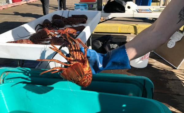 Fishermen sell freshly caught seafood at the Saturday Fishermen's Market in Santa Barbara, Calif. When the pandemic began, fishermen watched their markets dry up overnight. Now, as well as public markets like this, some are selling to food assistance prog