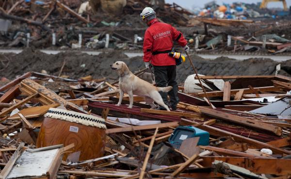 A team member from NPO Japan Rescue Dog Association and his dog search for victims in Rikuzentakata, Miyagi prefecture in the aftermath of the March 2011 earthquake, tsunami and nuclear disaster.