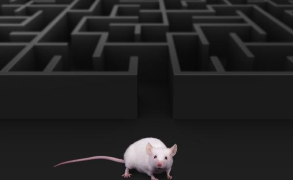 "For a rat, ""metamemory"" is about knowing whether you remember that predator in the distance, researchers say. For people, knowing what we don't know can be especially useful in navigating social interactions."