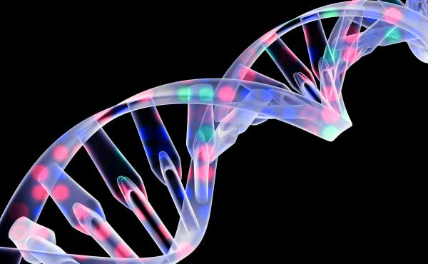 After decades of disappointment, doctors have been able to treat several different types of genetic conditions by giving each patient a healthy version of their defective gene.