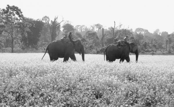 From Giants of the Monsoon Forest: Living and Working with Elephants by Jacob Shell