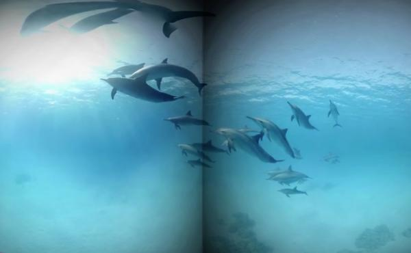 "Though not the same as actually jumping into the waves, a virtual reality program like this one that let a headset-wearing patient ""swim with dolphins"" was enough of an immersive distraction to significantly reduce pain, a study found."