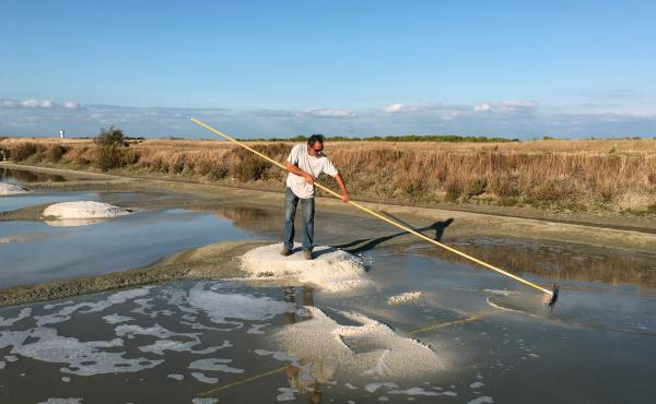 Hervé Zarka uses a tool called a simoussi to rake up salt in his marshland on the island of Noirmoutier in France. He says there are many minerals in natural sea salt, such as magnesium and potassium, that aren't in industrial salt.