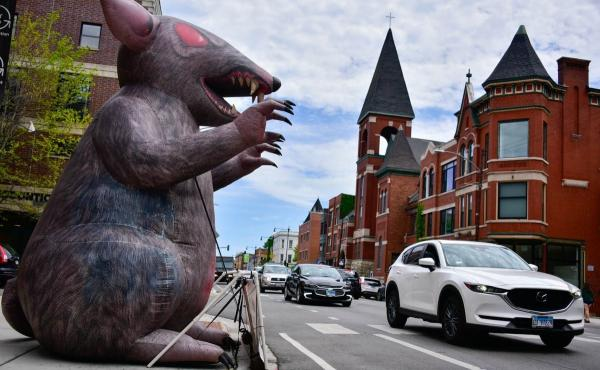 Where there are labor disputes, Scabby the Rat — in this case deployed by a local union in Chicago — will be there to call attention to workers' rights.