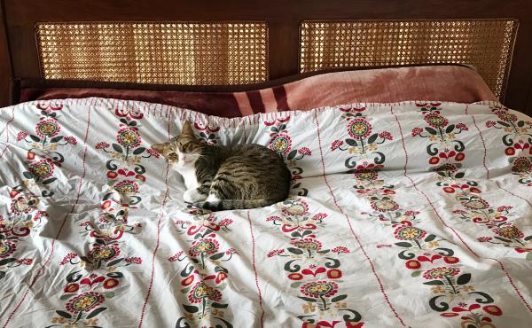 Shawareb the cat reclaims his place on NPR correspondent Diaa Hadid's bed hours after he arrives in Islamabad.
