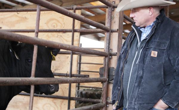 Elation is an Angus bull that recently sold for $800,000. His co-owner, Brian Bell, sells Elation's semen for $50 a sample, about double the going rate.