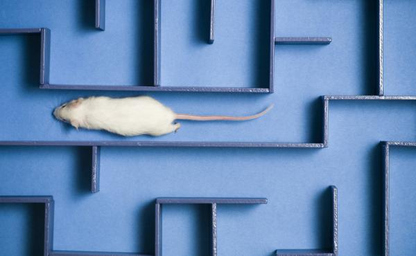 Researchers found that a protein in human umbilical cord blood plasma improved learning and memory in older mice, but there's no indication it would work in people.