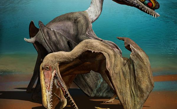 Artist's rendition of a family of pterosaurs, which had massive wingspans of up to 13 feet and likely ate fish with their large teeth-filled jaws.