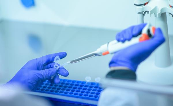 News of a good immune response in animals bodes well for testing future COVID-19 vaccines.