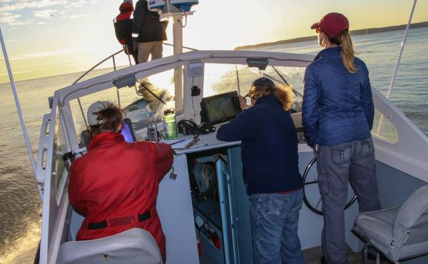 The New England Aquarium team searching for right whales, at sunrise in the Bay of Fundy. Johanna Anderson and Kelsey Howe scan the waters while Marianna Hagbloom logs data, Amy Knowlton adjusts a GPS unit, and Brigid McKenna steers the Nereid.