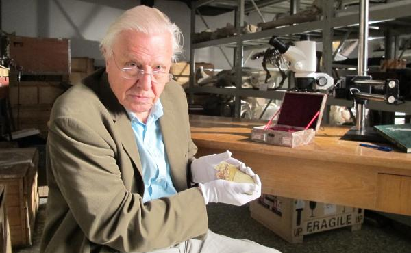 Sir David Attenborough at the Beijing Museum of Natural History with fossil of Juramaia, as featured in the Smithsonian Channel series Rise of Animals: Triumph of the Vertebrates.
