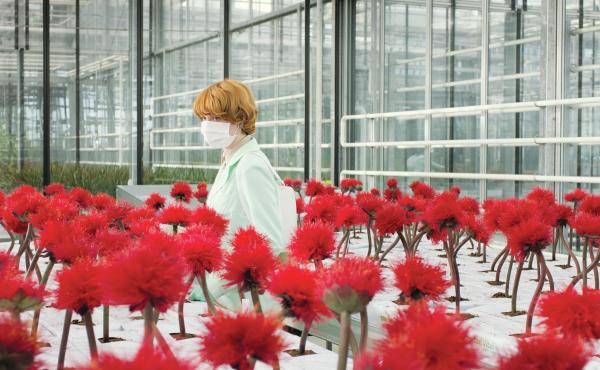 Feed Me, See More: In Jessica Hausner's Little Joe, Alice (Emily Beechum, above) is dedicated horticulturalist and single mother creating a new revolutionary plant species.